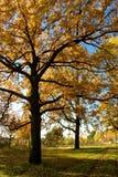 Sosta di autunno dell'albero di quercia Fotografie Stock Libere da Diritti