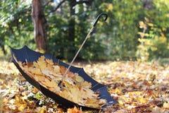 Sosta di autunno, ombrello con i fogli Fotografia Stock