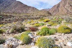 Sosta di condizione del deserto di Anza-Borrego, California