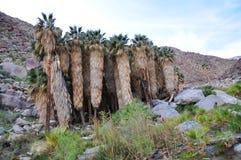 Sosta di condizione del deserto di Anza-Borrego, California fotografia stock libera da diritti