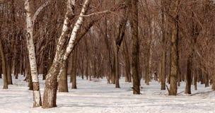 Sosta di inverno Fotografia Stock Libera da Diritti