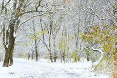 Sosta di inverno Fotografie Stock Libere da Diritti