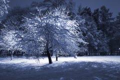 Sosta di inverno alla notte Immagini Stock