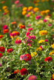 Sosta di Lumphini, fiori. Fotografia Stock Libera da Diritti