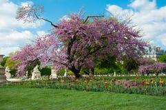 Sosta di Parigi Jardin Lussemburgo Fotografie Stock Libere da Diritti