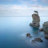 Sosta di Portofino. Roccia dell'albero di pino. Esposizione lunga. Fotografia Stock Libera da Diritti