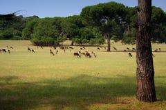 Sosta di safari Fotografia Stock Libera da Diritti