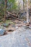 Sosta e roccia in natura selvaggia Fotografia Stock