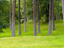 Sosta ed alberi erbosi Fotografie Stock
