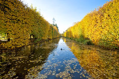 Sosta gialla di autunno Immagine Stock