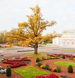 Sosta Kadriorg, Tallinn di autunno immagini stock