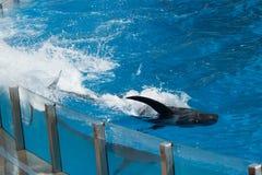 Sosta marina fotografia stock libera da diritti