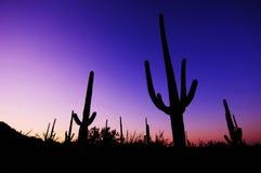 Sosta nazionale 2 del Saguaro Fotografie Stock