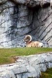 Sosta nazionale del Banff fotografie stock libere da diritti
