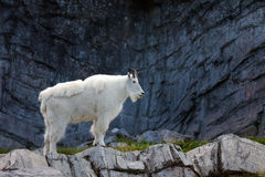 Sosta nazionale del Banff fotografia stock