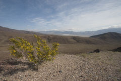 Sosta nazionale del Death Valley Immagini Stock Libere da Diritti