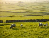 Sosta nazionale del distretto di punta dell'Inghilterra Derbyshire Immagini Stock Libere da Diritti
