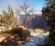 Sosta nazionale del grande canyon immagine stock