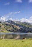 Sosta nazionale del Picos de Europa spain fotografia stock