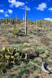 Sosta nazionale del Saguaro immagine stock libera da diritti