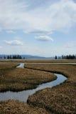 Sosta nazionale del Yellowstone Immagine Stock Libera da Diritti