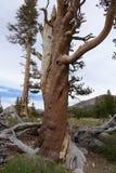 Sosta nazionale del Yosemite - California Fotografia Stock