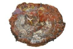Sosta nazionale della foresta Petrified - Arizona. Immagine Stock Libera da Diritti