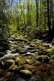 Sosta nazionale della montagna di Smokey fotografie stock