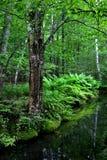 Sosta nazionale di Acadia, Maine fotografie stock