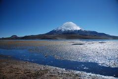 Sosta nazionale di Lauca - Cile Fotografia Stock Libera da Diritti