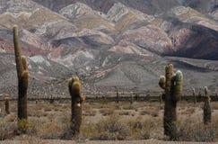 Sosta nazionale di Los Cardones sulla valle di Calchaquíes Fotografia Stock