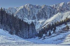 Sosta nazionale di Piatra Craiului, Romania Immagini Stock
