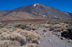 Sosta nazionale di Teide Fotografia Stock Libera da Diritti