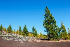 Sosta nazionale di Teide in Tenerife, Spagna immagine stock libera da diritti