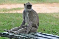Sosta nazionale di Yala, Sri Lanka Immagini Stock
