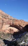 Sosta nazionale di Zion, Utah, S.U.A. fotografia stock libera da diritti