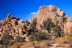 Sosta nazionale nascosta dell'albero di Joshua della roccia della valle Fotografie Stock Libere da Diritti