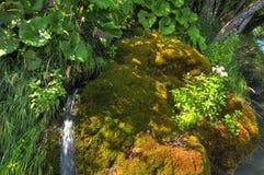 Sosta nazionale Plitvice fotografia stock