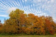 Sosta nei colori di autunno Fotografia Stock Libera da Diritti
