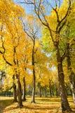 Sosta nei colori di autunno Fotografia Stock