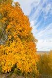 Sosta nei colori di autunno Fotografie Stock Libere da Diritti