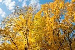 Sosta nei colori di autunno Immagini Stock Libere da Diritti