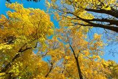 Sosta nei colori di autunno Immagini Stock