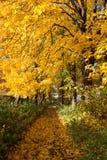 Sosta nei colori di autunno Immagine Stock