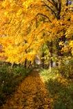Sosta nei colori di autunno Fotografie Stock