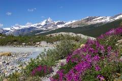 Sosta provinciale A di Mt. Robson Fotografia Stock