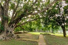 Sosta storica di Sukhothai Immagini Stock Libere da Diritti
