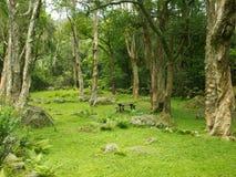 Sosta verde della foresta Fotografie Stock