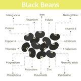 Sostanza nutriente dei fagioli neri dei fatti e delle indennità-malattia, grafico di informazioni Fotografie Stock