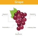 Sostanza nutriente dell'uva dei fatti e delle indennità-malattia, frutta del grafico di informazioni Fotografia Stock